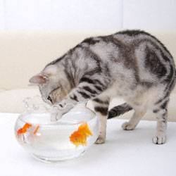Как помочь  домашнему коту снизить вес