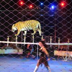Возникновение цирка в Челябинске