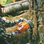 Аварийная рубка деревьев в Подмосковье